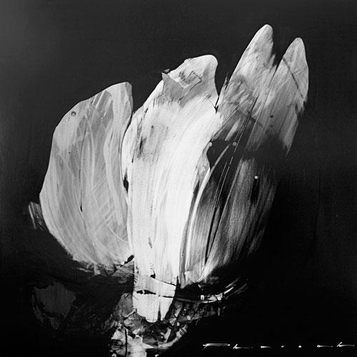 Shroud by Peter Pharoah